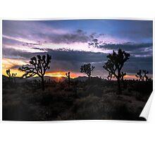 Amazing Sunset Sunrise over Joshua Tree Park Poster