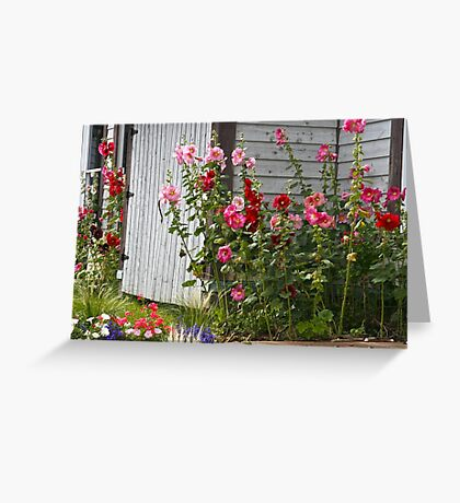 Hollyhocks on Prince Edward Island Greeting Card
