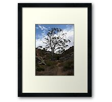 Majestic Tree.  Mannum.  South Australia. Framed Print