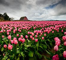 Pretty in Pink by Dan Mihai