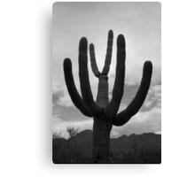 Tucson II BW Canvas Print