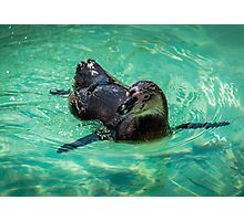 Penguin Heaven Photographic Print