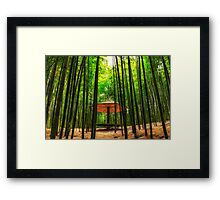 Among the bamboo forest Framed Print