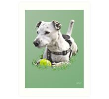 Jack : Jack Russel Terrier x Staffy Art Print