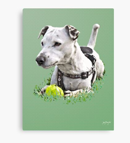 Jack : Jack Russel Terrier x Staffy Canvas Print