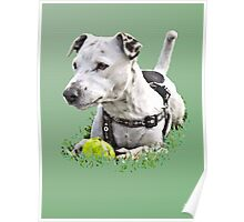 Jack : Jack Russel Terrier x Staffy Poster