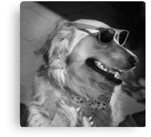 Golden retriever wearing sunglasses Canvas Print