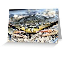 Blue Claw Crab in the Sand Greeting Card