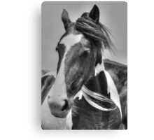Piebald Filly Canvas Print