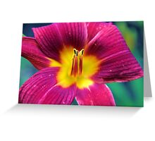 Red Daylilly Greeting Card