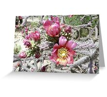 Staghorn Cactus Blooms Greeting Card
