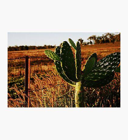 Lonely Cactus Photographic Print