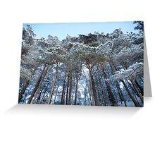 Winter pine trees Greeting Card