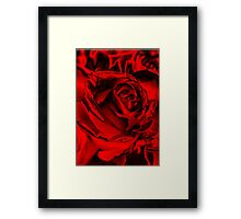 Red for the Holidays Framed Print