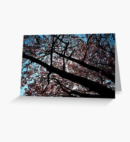 Japanese cherry tree in contrast Greeting Card