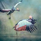 Cranes arriving by Tarrby