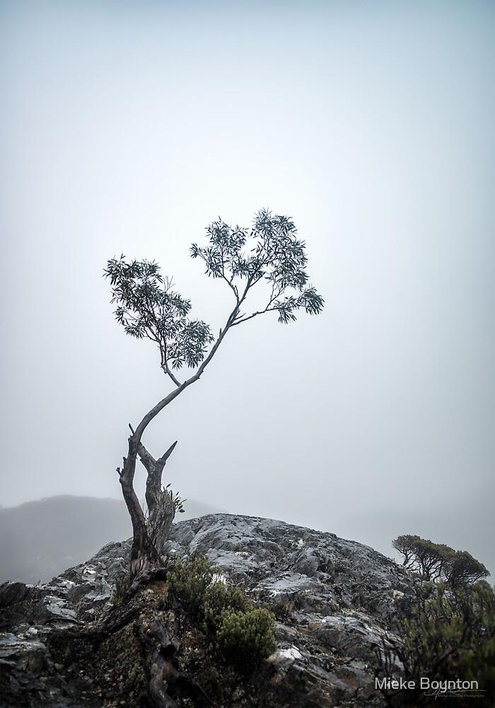 Braving the Elements by Mieke Boynton