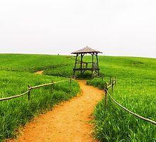 Barley Field  by aaronchoi