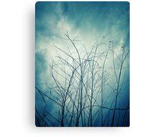Dark Tree Stems With Blue Sky Bacground Canvas Print