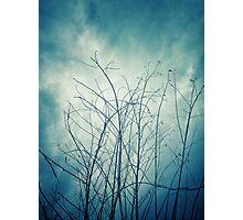 Dark Tree Stems With Blue Sky Bacground Photographic Print
