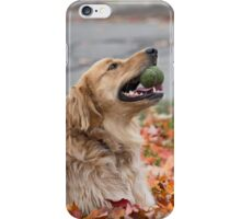 Golden retriever lying on fall leaves iPhone Case/Skin