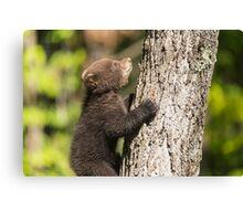 Black Bear cub climbing a tree Canvas Print