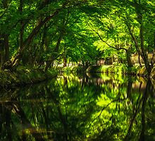 Summer Reflections 2 by aaronchoi