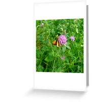 Skipper and Pink Wildflower  Greeting Card
