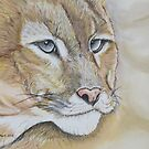 Mountain lion in Pastel by Linda Sparks