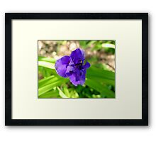 Purple Flower & Insect Framed Print