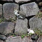 Cat And Kitten by davidandmandy