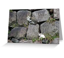 Cat And Kitten Greeting Card
