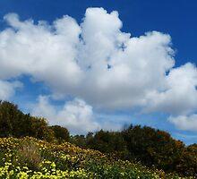 Wildflowers And Sky by davidandmandy