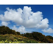 Wildflowers And Sky Photographic Print