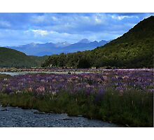 Te Anau Photographic Print