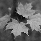 Leaves #5406-20130530 by Philip Werner