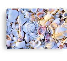 Seashells at Sunset Have Great Colors! Canvas Print