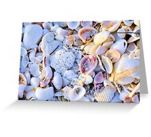 Seashells at Sunset Have Great Colors! Greeting Card