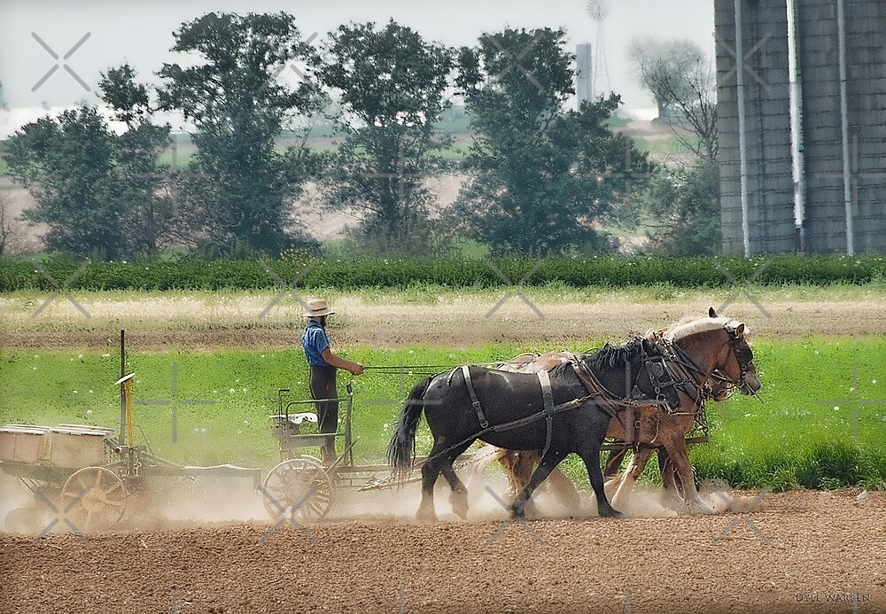 Amish Farmer and his Working Horses by Dyle Warren