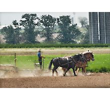 Amish Farmer and his Working Horses Photographic Print