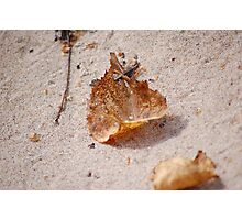 Leaf Path Photographic Print