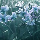Misty Blue Orchid by Ginny Schmidt