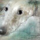 Those greyhound eyes! by Christina Brundage