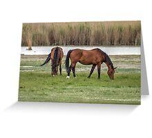 Grazing Horses Greeting Card