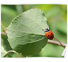 Ladybugs And Aspen Leaves Poster