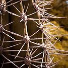 Prickled by Hena Tayeb