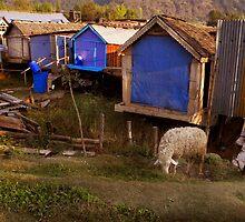Srinagar by Freja Friborg