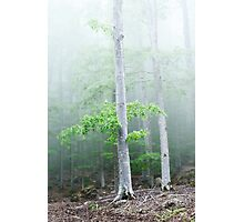 Fog and wind in the forest Photographic Print