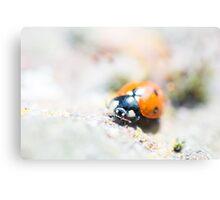 Super Up-close Ladybird Canvas Print
