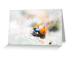 Super Up-close Ladybird Greeting Card